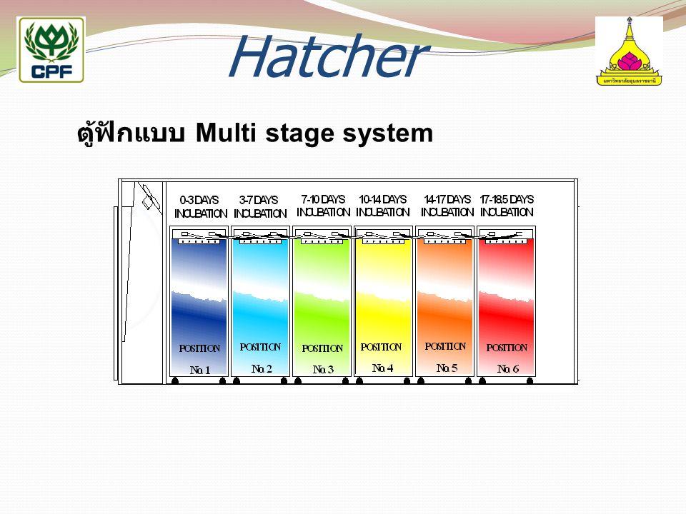 Hatcher ตู้ฟักแบบ Multi stage system