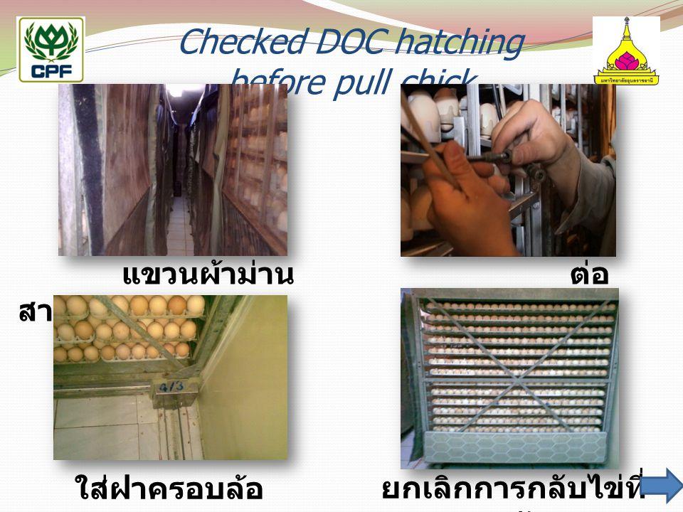 Checked DOC hatching before pull chick แขวนผ้าม่าน ต่อ สายลมกลับไข่ ใส่ฝาครอบล้อยกเลิกการกลับไข่ที่ 14 วัน