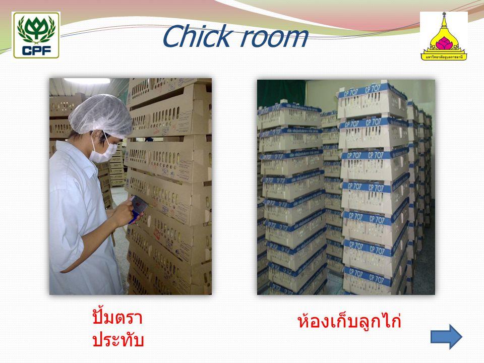 Chick room ปั้มตรา ประทับ ห้องเก็บลูกไก่