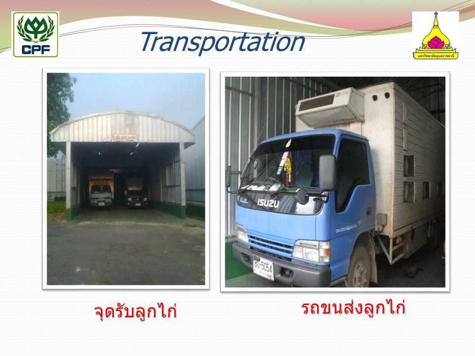 Transportation จุดรับลูกไก่ รถขนส่งลูกไก่