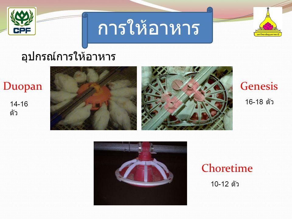 การให้อาหาร อุปกรณ์การให้อาหาร Duopan Choretime Genesis 14-16 ตัว 16-18 ตัว 10-12 ตัว