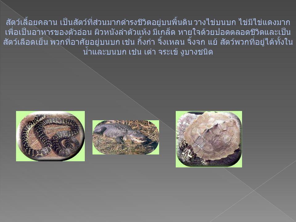 สัตว์เลื้อยคลาน เป็นสัตว์ที่ส่วนมากดำรงชีวิตอยู่บนพื้นดิน วางไข่บนบก ไข่มีไข่แดงมาก เพื่อเป็นอาหารของตัวอ่อน ผิวหนังลำตัวแห้ง มีเกล็ด หายใจด้วยปอดตลอดชีวิตและเป็น สัตว์เลือดเย็น พวกที่อาศัยอยู่บนบก เช่น กิ้งก่า จิ้งเหลน จิ้งจก แย้ สัตว์พวกที่อยู่ได้ทั้งใน น้ำและบนบก เช่น เต่า จระเข้ งูบางชนิด