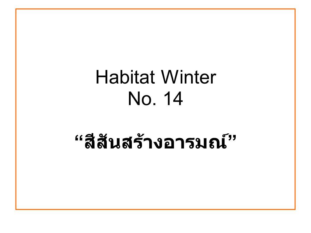 Habitat Winter No. 14 สีสันสร้างอารมณ์