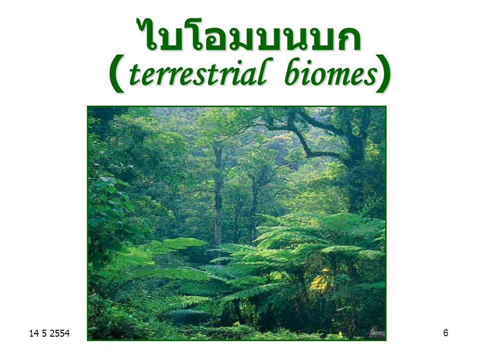 14 5 255427 แหล่งน้ำเค็ม (marine biomes) มีปริมาณมากถึงร้อยละ 71 ของพื้นที่ ผิวโลก ( 3 ใน 4 ส่วน ) มีปริมาณมากถึงร้อยละ 71 ของพื้นที่ ผิวโลก ( 3 ใน 4 ส่วน ) มีความลึกเฉลี่ย 3,750 เมตร มีความลึกเฉลี่ย 3,750 เมตร มีเกลือเฉลี่ยร้อยละ 3.5 หรือ 35 ppt ประกอบด้วย มีเกลือเฉลี่ยร้อยละ 3.5 หรือ 35 ppt ประกอบด้วย ทะเลสาบ ทะเลสาบ ทะเล ทะเล มหาสมุทร มหาสมุทร