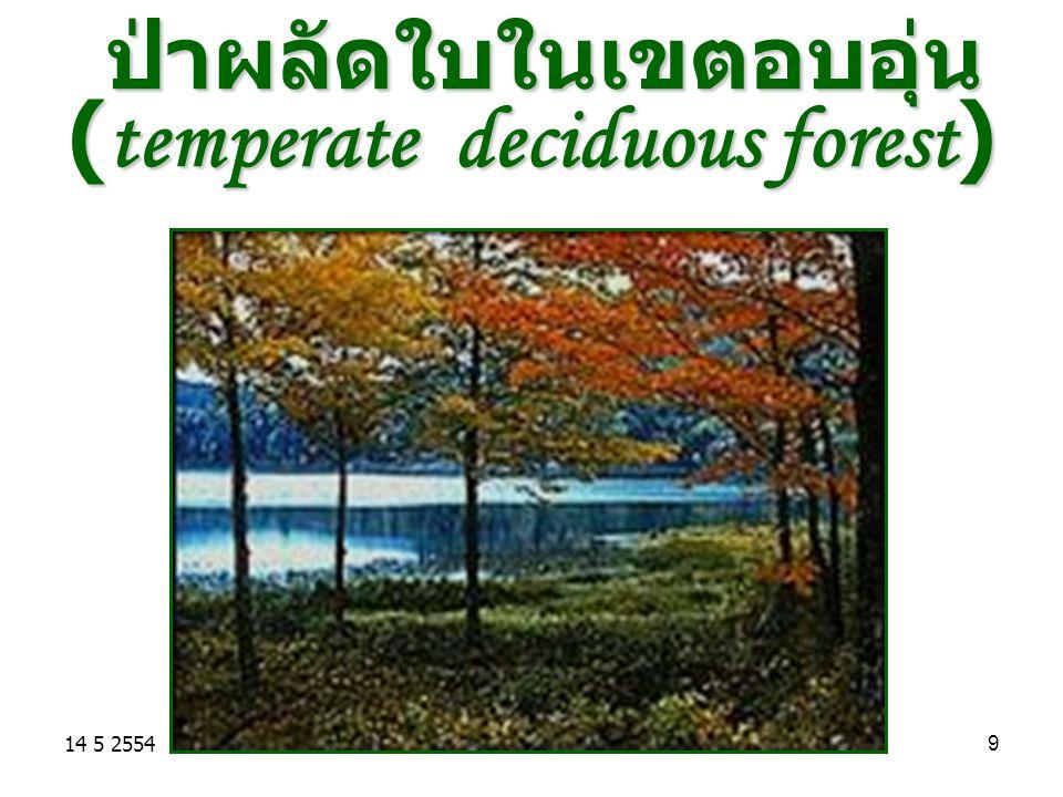 14 5 255410 ป่าผลัดใบในเขตอบอุ่น (temperate deciduous forest) เป็นป่าในเขตละติจูดกลาง เป็นป่าในเขตละติจูดกลาง มีอากาศค่อนข้างเย็น มีอากาศค่อนข้างเย็น ปริมาณน้ำฝนเฉลี่ย 100 cm./ ปี ปริมาณน้ำฝนเฉลี่ย 100 cm./ ปี ต้นไม้มีการผลัดใบ ต้นไม้มีการผลัดใบ พืชเด่น : ยูคาลิปตัส เมเปิล โอ๊ก พืชเด่น : ยูคาลิปตัส เมเปิล โอ๊ก ตัวอย่างในไทย ทุ่งแสลงหลวง พิษณุโลก ตัวอย่างในไทย ทุ่งแสลงหลวง พิษณุโลก