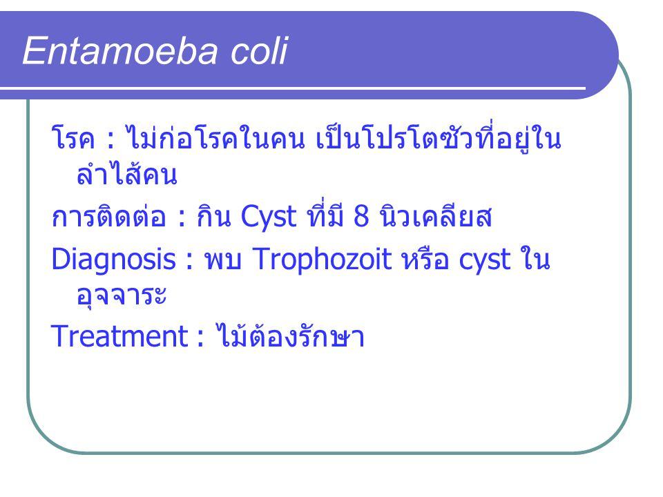 Entamoeba coli โรค : ไม่ก่อโรคในคน เป็นโปรโตซัวที่อยู่ใน ลำไส้คน การติดต่อ : กิน Cyst ที่มี 8 นิวเคลียส Diagnosis : พบ Trophozoit หรือ cyst ใน อุจจาระ