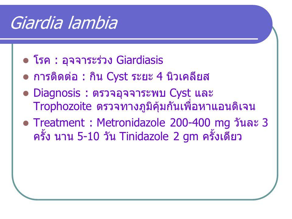 Giardia lambia โรค : อุจจาระร่วง Giardiasis การติดต่อ : กิน Cyst ระยะ 4 นิวเคลียส Diagnosis : ตรวจอุจจาระพบ Cyst และ Trophozoite ตรวจทางภูมิคุ้มกันเพื
