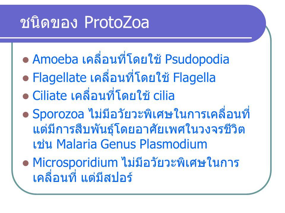 ชนิดของ ProtoZoa Amoeba เคลื่อนที่โดยใช้ Psudopodia Flagellate เคลื่อนที่โดยใช้ Flagella Ciliate เคลื่อนที่โดยใช้ cilia Sporozoa ไม่มีอวัยวะพิเศษในการ