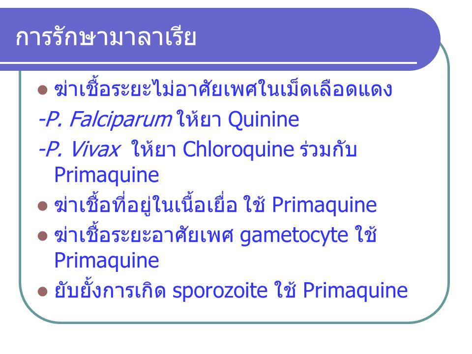 การรักษามาลาเรีย ฆ่าเชื้อระยะไม่อาศัยเพศในเม็ดเลือดแดง -P. Falciparum ให้ยา Quinine -P. Vivax ให้ยา Chloroquine ร่วมกับ Primaquine ฆ่าเชื้อที่อยู่ในเน
