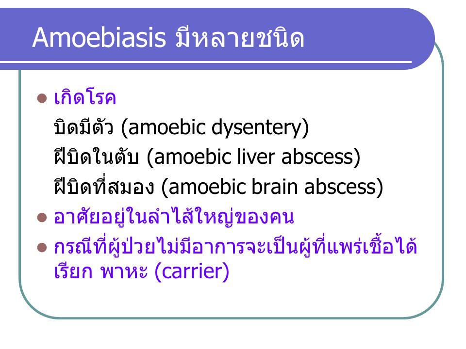 Amoebiasis มีหลายชนิด เกิดโรค บิดมีตัว (amoebic dysentery) ฝีบิดในตับ (amoebic liver abscess) ฝีบิดที่สมอง (amoebic brain abscess) อาศัยอยู่ในลำไส้ใหญ