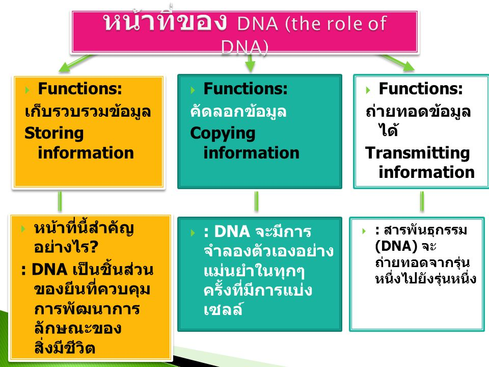  Functions: เก็บรวบรวมข้อมูล Storing information  Functions: เก็บรวบรวมข้อมูล Storing information  Functions: คัดลอกข้อมูล Copying information  Functions: ถ่ายทอดข้อมูล ได้ Transmitting information  หน้าที่นี้สำคัญ อย่างไร .