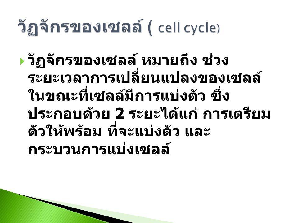  วัฏจักรของเซลล์ หมายถึง ช่วง ระยะเวลาการเปลี่ยนแปลงของเซลล์ ในขณะที่เซลล์มีการแบ่งตัว ซึ่ง ประกอบด้วย 2 ระยะได้แก่ การเตรียม ตัวให้พร้อม ที่จะแบ่งตัว และ กระบวนการแบ่งเซลล์