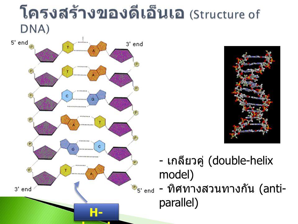 1) น้ำตาล 2-deoxyribose ซึ่งเป็น น้ำตาลที่มีคาร์บอน 5 อะตอม โดยที่ คาร์บอนตำแหน่งที่ 2 จะไม่มีหมู่ไฮดร็อกซี่ (OH-group) 2) ไนโตรจีนัสเบส (nitrogenous base) ได้แก่ - purine เบส adenine, (A) และ guanine (G) - pyrimidine เบส thymine (T) และ cytosine (C) พบว่าในสิ่งมีชีวิตทั่วไปจะมีอัตราส่วน A ≈ T, C ≈ G และ A+G ≈ T+C 3) หมู่ฟอสเฟต (phosphate group) ซึ่งประกอบด้วยฟอสฟอรัสและออกซิเจน