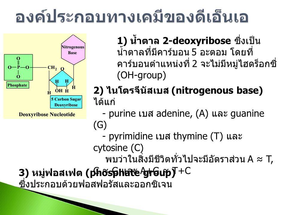 Subunit enzyme (Protein) mRNA Protein exon1 exon2exon3exon4 intron1intron2intron3 mRNA 5'3'3'5' tRNA, rRNA