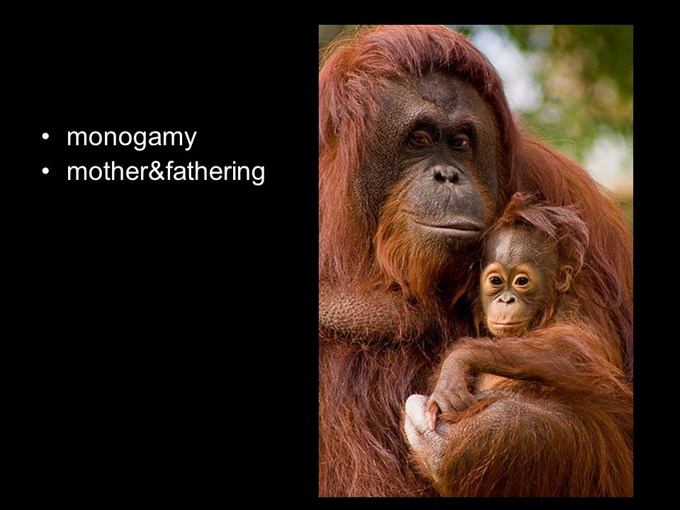 monogamy mother&fathering