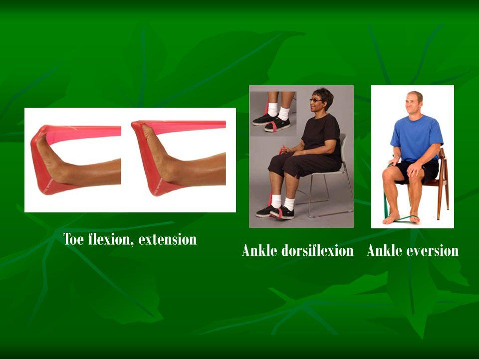 Toe flexion, extension Ankle dorsiflexionAnkle eversion