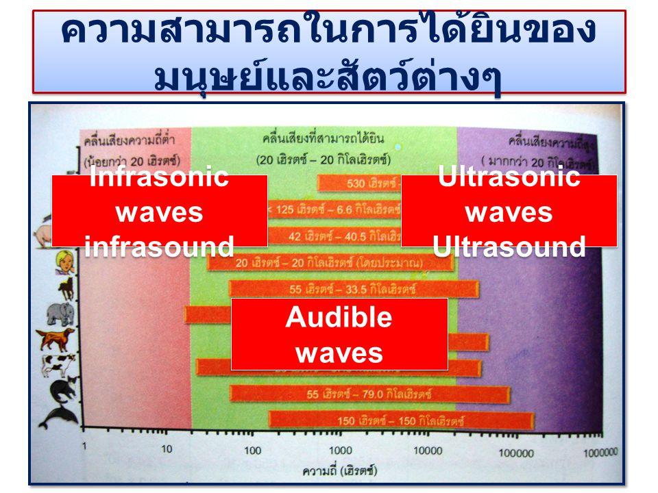 ความสามารถในการได้ยินของ มนุษย์และสัตว์ต่างๆ Infrasonic waves infrasound Infrasonic waves infrasound Ultrasonic waves Ultrasound Ultrasonic waves Ultr