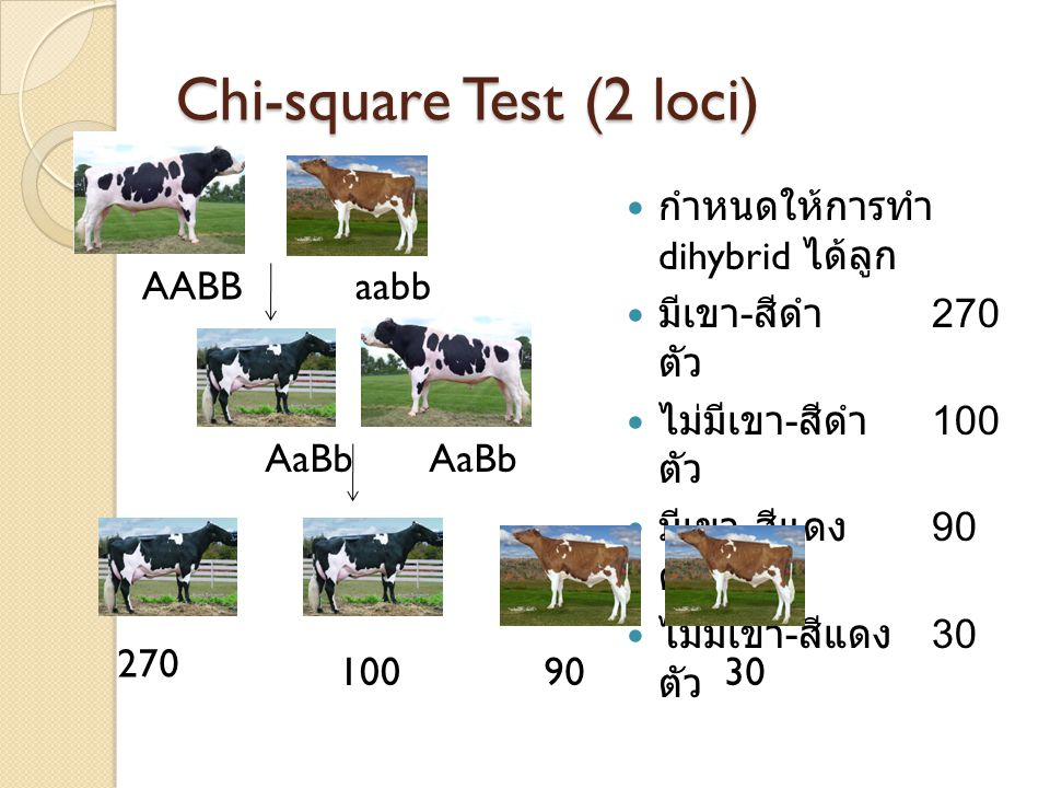 Chi-square Test (2 loci) กำหนดให้การทำ dihybrid ได้ลูก มีเขา - สีดำ 270 ตัว ไม่มีเขา - สีดำ 100 ตัว มีเขา - สีแดง 90 ตัว ไม่มีเขา - สีแดง 30 ตัว AABBaabb AaBb 270 1009030
