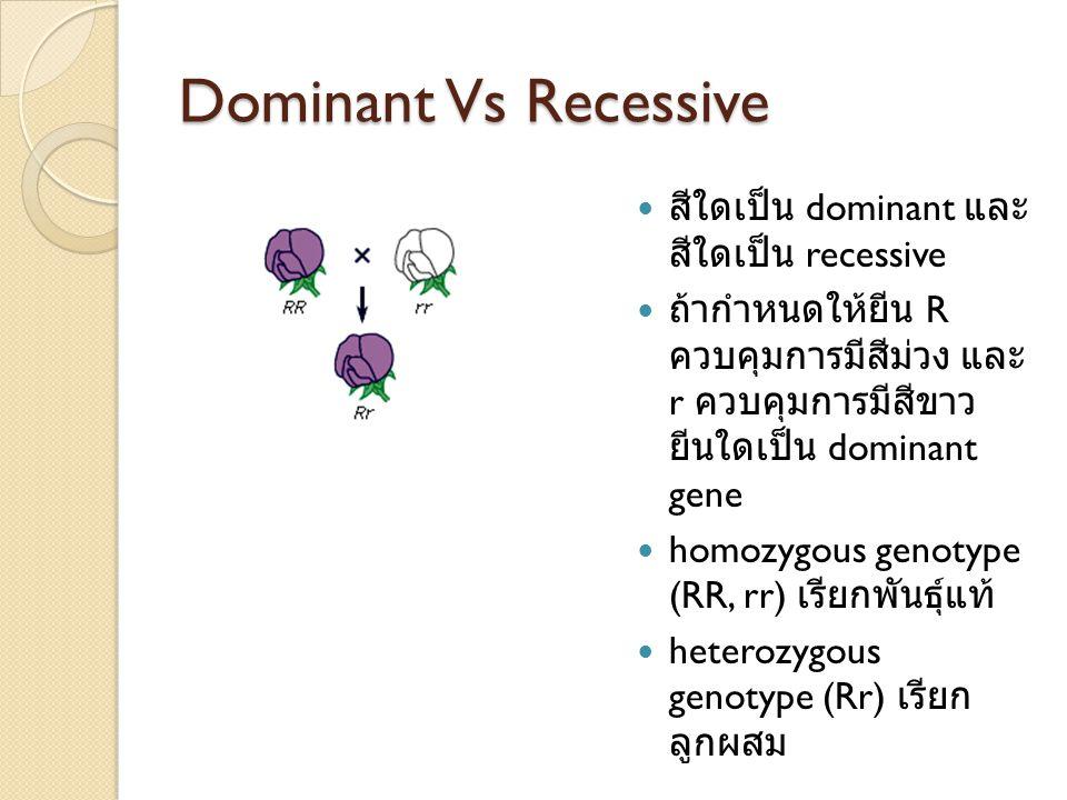 Dominant Vs Recessive สีใดเป็น dominant และ สีใดเป็น recessive ถ้ากำหนดให้ยีน R ควบคุมการมีสีม่วง และ r ควบคุมการมีสีขาว ยีนใดเป็น dominant gene homozygous genotype (RR, rr) เรียกพันธุ์แท้ heterozygous genotype (Rr) เรียก ลูกผสม