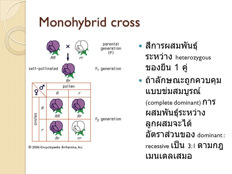Monohybrid cross สีการผสมพันธุ์ ระหว่าง heterozygous ของยีน 1 คู่ ถ้าลักษณะถูกควบคุม แบบข่มสมบูรณ์ (complete dominant) การ ผสมพันธุ์ระหว่าง ลูกผสมจะได้ อัตราส่วนของ dominant : recessive เป็น 3:1 ตามกฎ เมนเดลเสมอ