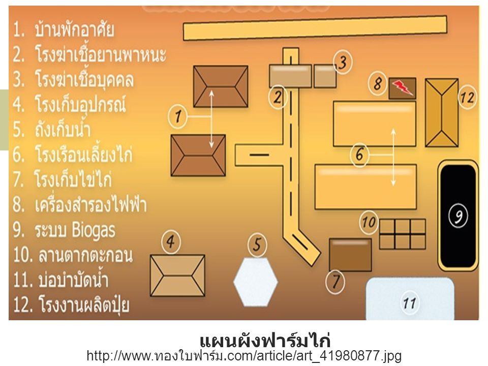 แผนผังฟาร์มไก่ http://www. ทองใบฟาร์ม.com/article/art_41980877.jpg