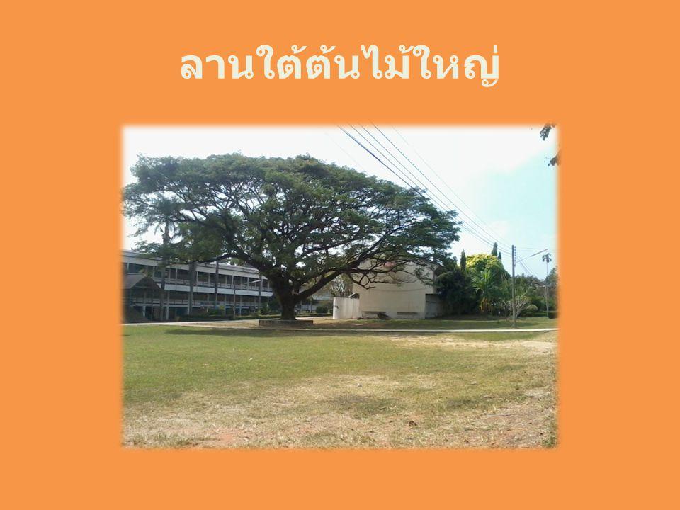 ลานใต้ต้นไม้ใหญ่