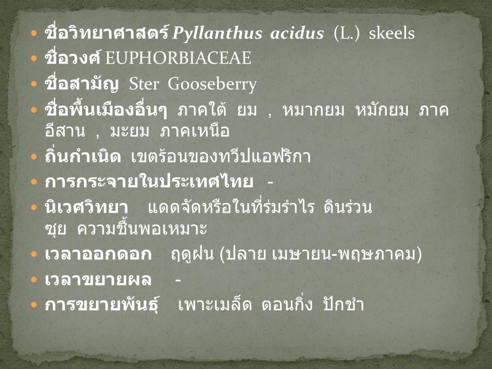 ชื่อวิทยาศาสตร์ Pyllanthus acidus (L.) skeels ชื่อวงศ์ EUPHORBIACEAE ชื่อสามัญ Ster Gooseberry ชื่อพื้นเมืองอื่นๆ ภาคใต้ ยม, หมากยม หมักยม ภาค อีสาน,