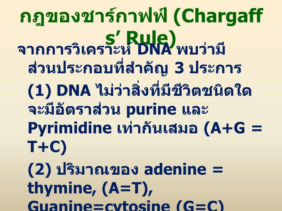 กฎของชาร์กาฟฟ์ (Chargaff s' Rule) จากการวิเคราะห์ DNA พบว่ามี ส่วนประกอบที่สำคัญ 3 ประการ (1) DNA ไม่ว่าสิ่งที่มีชีวิตชนิดใด จะมีอัตราส่วน purine และ