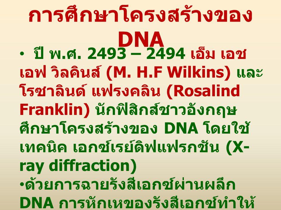 การศึกษาโครงสร้างของ DNA ปี พ. ศ. 2493 – 2494 เอ็ม เอช เอฟ วิลคินส์ (M. H.F Wilkins) และ โรซาลินด์ แฟรงคลิน (Rosalind Franklin) นักฟิสิกส์ชาวอังกฤษ ศึ