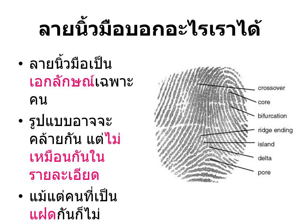 ลายนิ้วมือบอกอะไรเราได้ ลายนิ้วมือเป็น เอกลักษณ์เฉพาะ คน รูปแบบอาจจะ คล้ายกัน แต่ไม่ เหมือนกันใน รายละเอียด แม้แต่คนที่เป็น แฝดกันก็ไม่ เหมือนกัน