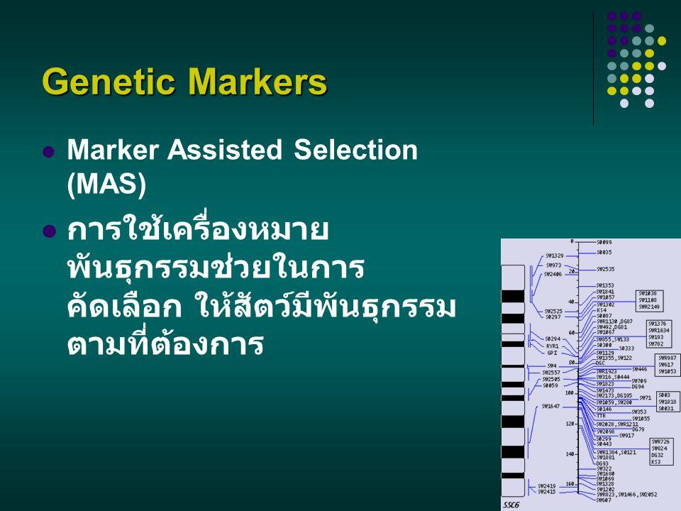 Genetic Markers Marker Assisted Selection (MAS) การใช้เครื่องหมาย พันธุกรรมช่วยในการ คัดเลือก ให้สัตว์มีพันธุกรรม ตามที่ต้องการ