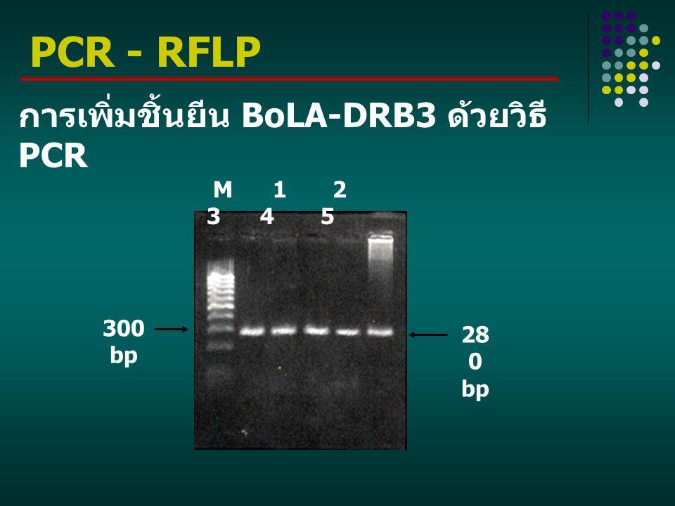 การเพิ่มชิ้นยีน BoLA-DRB3 ด้วยวิธี PCR M 1 2 3 4 5 28 0 bp 300 bp PCR - RFLP