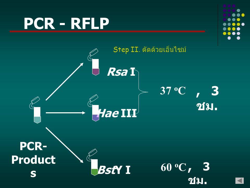 Rsa I Hae III BstY I PCR- Product s 37 o C, 3 ชม. 60 o C, 3 ชม. Step II. ตัดด้วยเอ็นไซม์