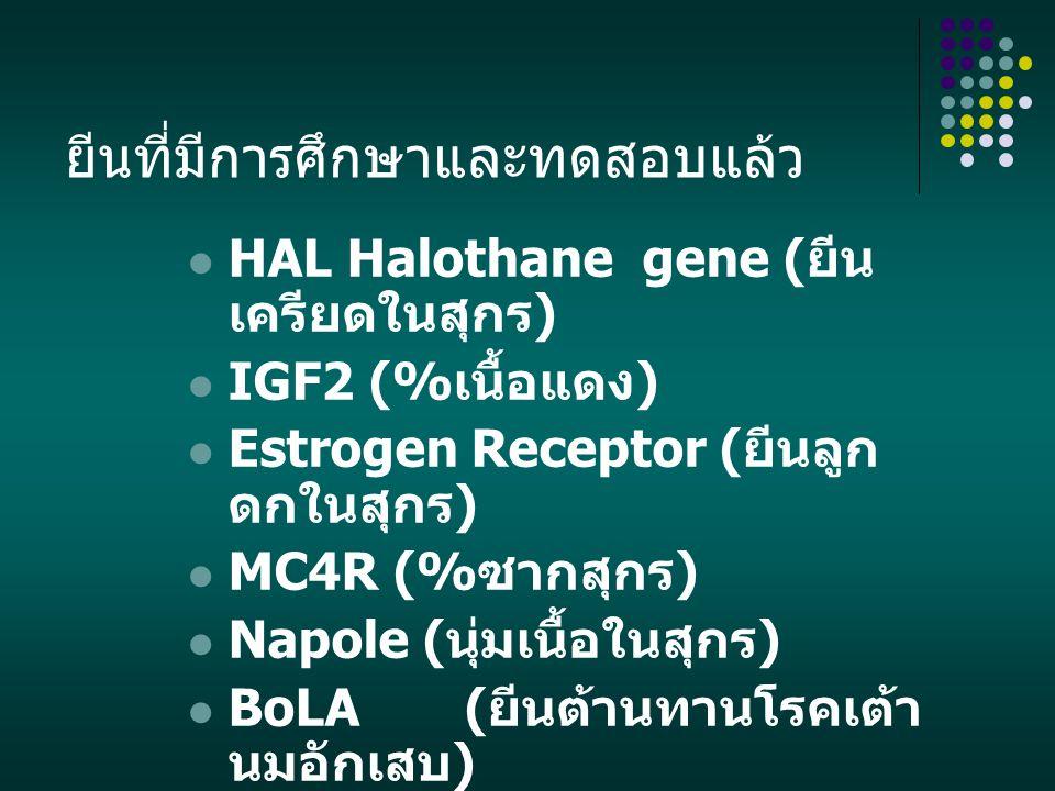 ยีนที่มีการศึกษาและทดสอบแล้ว HAL Halothane gene ( ยีน เครียดในสุกร ) IGF2 (% เนื้อแดง ) Estrogen Receptor ( ยีนลูก ดกในสุกร ) MC4R (% ซากสุกร ) Napole
