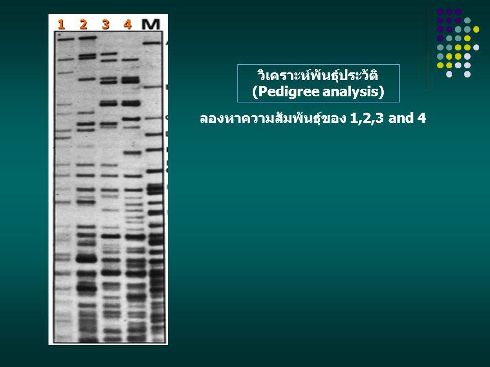 1 2 3 4 ลองหาความสัมพันธุ์ของ 1,2,3 and 4 วิเคราะห์พันธุ์ประวัติ (Pedigree analysis)
