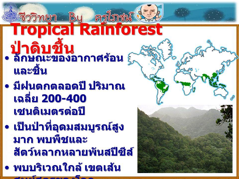 Tropical Rainforest ป่าดิบชื้น ลักษณะของอากาศร้อน และชื้น ลักษณะของอากาศร้อน และชื้น มีฝนตกตลอดปี ปริมาณ เฉลี่ย 200-400 เซนติเมตรต่อปี มีฝนตกตลอดปี ปร