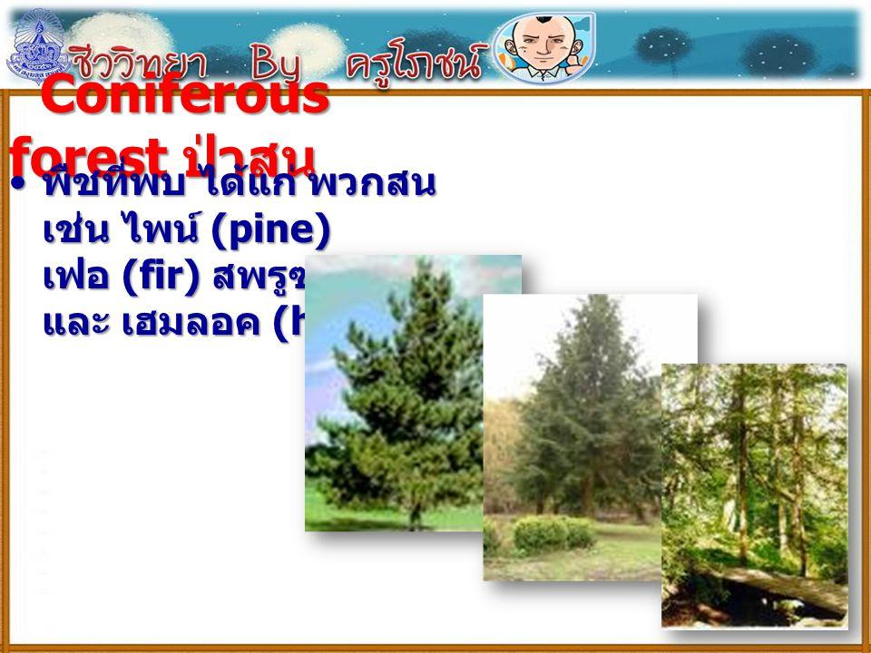 Coniferous forest ป่าสน Coniferous forest ป่าสน พืชที่พบ ได้แก่ พวกสน เช่น ไพน์ (pine) เฟอ (fir) สพรูซ (spruce) และ เฮมลอค (hemlock) พืชที่พบ ได้แก่ พ