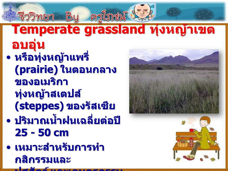Temperate grassland ทุ่งหญ้าเขต อบอุ่น หรือทุ่งหญ้าแพรี่ (prairie) ในตอนกลาง ของอเมริกา ทุ่งหญ้าสเตปส์ (steppes) ของรัสเซีย หรือทุ่งหญ้าแพรี่ (prairie