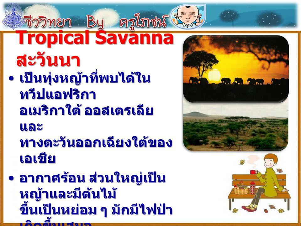 Tropical Savanna สะวันนา เป็นทุ่งหญ้าที่พบได้ใน ทวีปแอฟริกา อเมริกาใต้ ออสเตรเลีย และ ทางตะวันออกเฉียงใต้ของ เอเชีย เป็นทุ่งหญ้าที่พบได้ใน ทวีปแอฟริกา