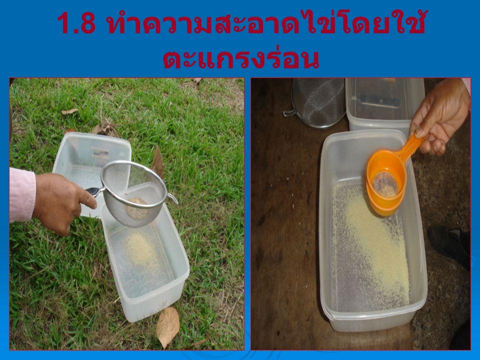 1.8 ทำความสะอาดไข่โดยใช้ ตะแกรงร่อน