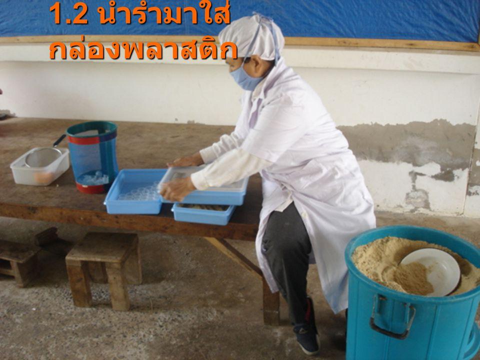 2.2 ทากาวในพื้นที่ 6.25 ตารางเซนติเมตร แล้วโรยไข่ผีเสื้อข้าวสาร