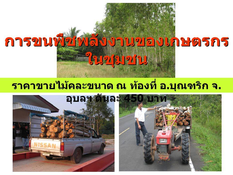 การขนพืชพลังงานของเกษตรกร ในชุมชน ราคาขายไม้คละขนาด ณ ท้องที่ อ. บุณฑริก จ. อุบลฯ ตันละ 450 บาท