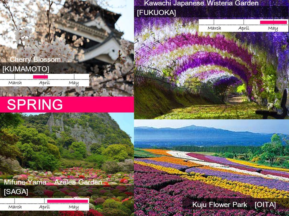 Kawachi Japanese Wisteria Garden [FUKUOKA] Cherry Blossom [KUMAMOTO] Mifune-Yama Azalea Garden [SAGA] SPRING Kuju Flower Park [OITA]
