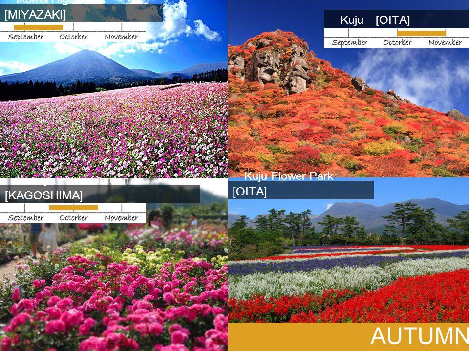 AUTUMN Ikoma Highlands [MIYAZAKI] Kuju [OITA] Kanoya Rose Garden [KAGOSHIMA] Kuju Flower Park [OITA]
