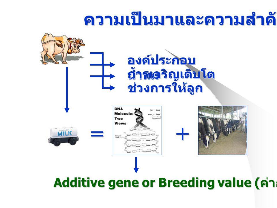 ความเป็นมาและความสำคัญของการวิจัย องค์ประกอบ น้ำนม ช่วงการให้ลูก การเจริญเติบโต =+ Additive gene or Breeding value ( ค่าการผสมพันธุ์ )