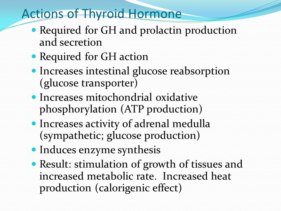 Actions of Thyroid Hormone Required for GH and prolactin production and secretion Required for GH action Increases intestinal glucose reabsorption (gl