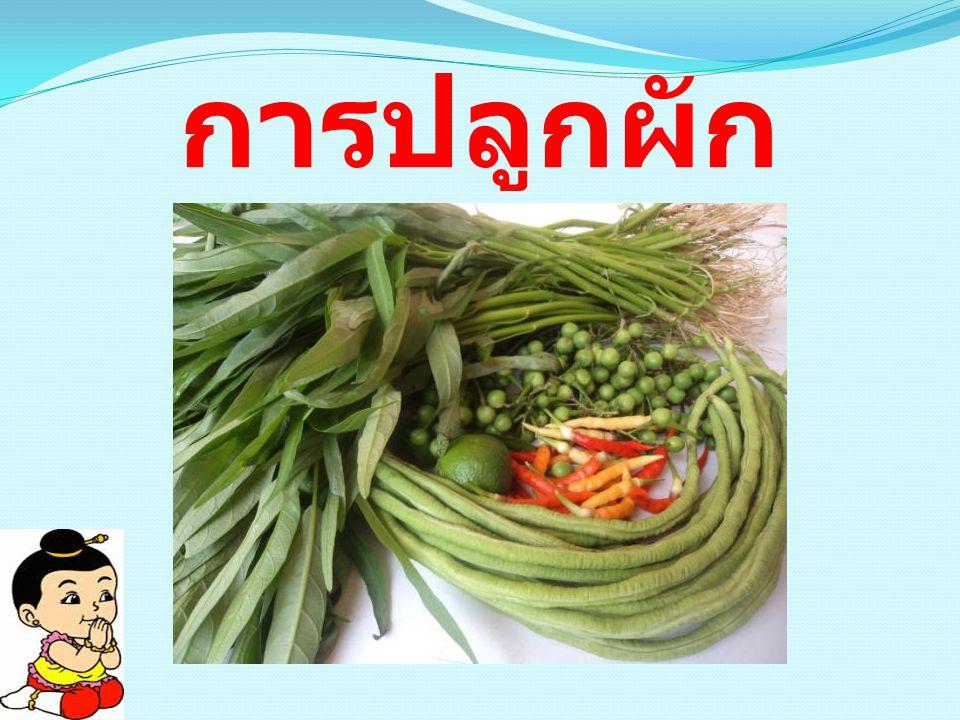 การปลูกผัก