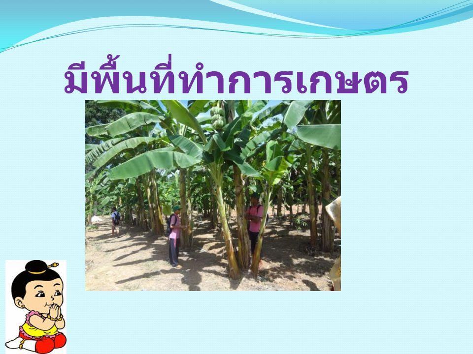 เปิดสอนวิชาเกษตร