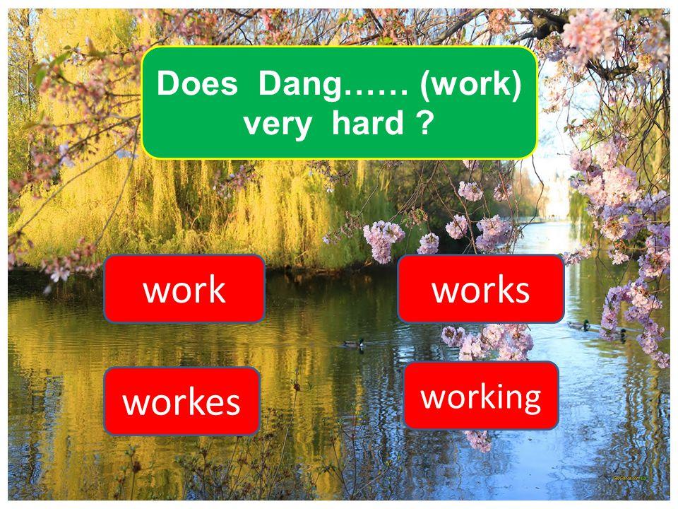 Does Dang…… (work) very hard ? work workes works working