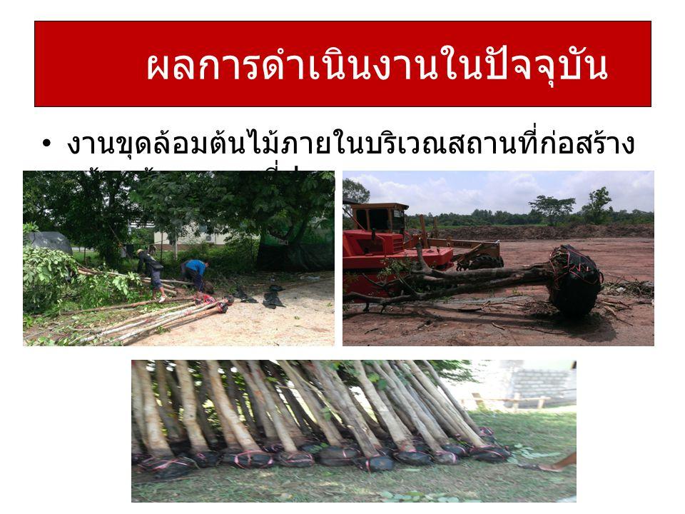 งานขุดล้อมต้นไม้ภายในบริเวณสถานที่ก่อสร้าง พร้อมย้ายสถานที่ปลูก ผลการดำเนินงานในปัจจุบัน
